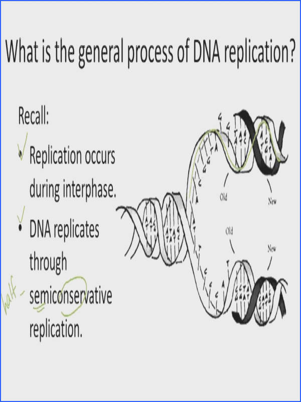 DNA Replication Overview