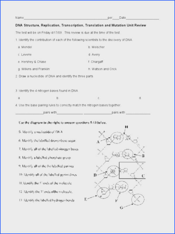 DNA Structure Replication Transcription Translation and Mutation Unit Review Worksheet for 9th Higher Ed