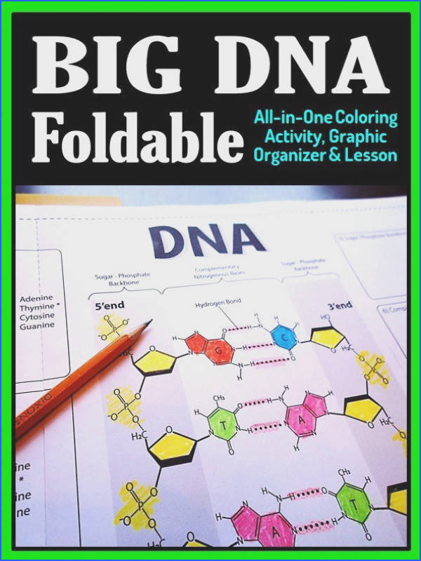 DNA Structure Foldable Big Foldable for Interactive Notebooks or Binders