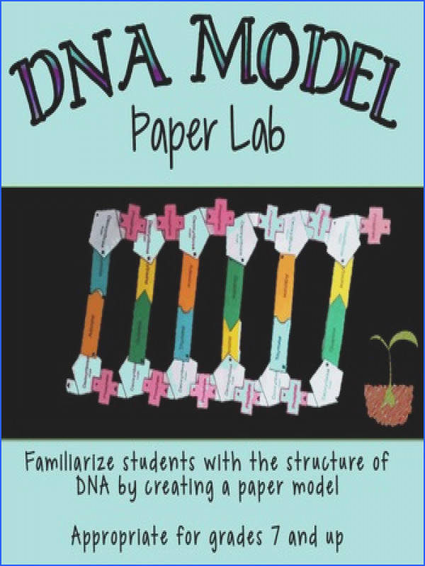 DNA Structure dry lab is a cut n paste activity in which students build models
