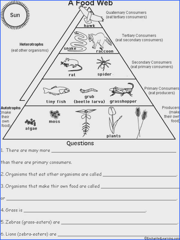 Ecological Pyramid Worksheet Food pyramid food chains and cartoon on pinterest
