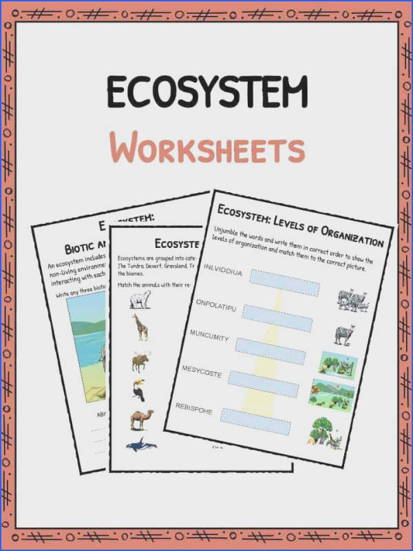 Download the Ecosystem Worksheets
