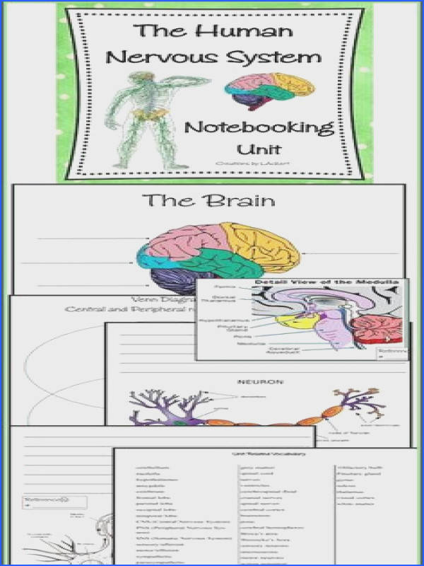 NEW DOWNLOAD The Human Body Nervous System Notebooking Unit Created for 5th 12th