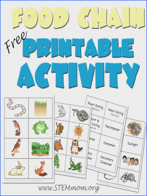 Food Chain Activity Free Printable 5 Pages NICE