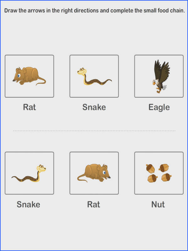 Food Chain Worksheet 2Nd Grade Worksheets for all Download and Worksheets