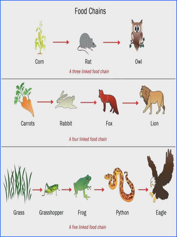 food chains and webs worksheet answers as well as food web principle and types view larger