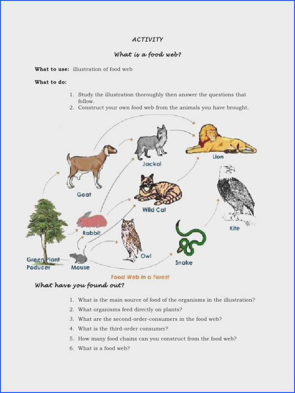 Food Web 2 Worksheet Answers Worksheets for all Download and Worksheets