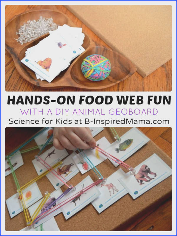 Food Webs Making food webs for different habitats $ science Teaching Printables Games and lessons Pinterest