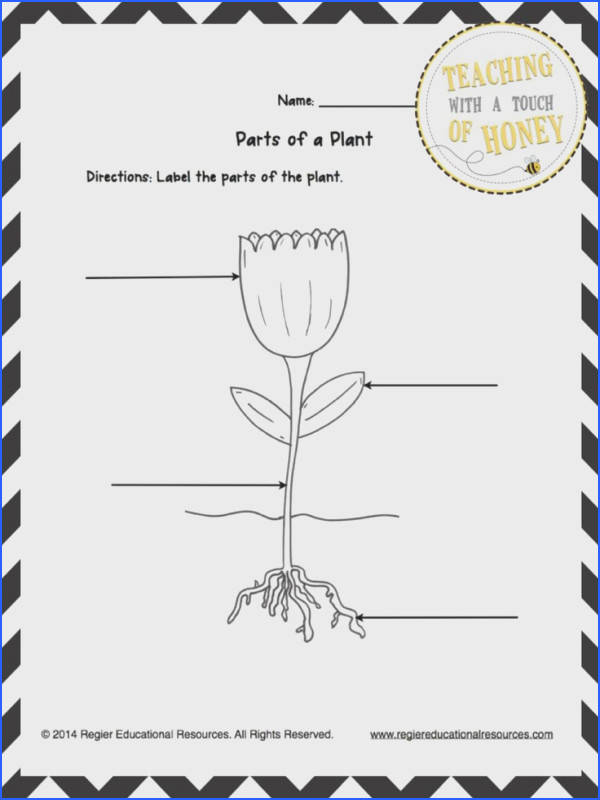 This freebie contains three tiered templates for labeling a plant