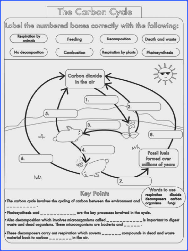 Gcse Carbon Cycle Worksheets and A3 Wall Posters Image Below Carbon Cycle Worksheet