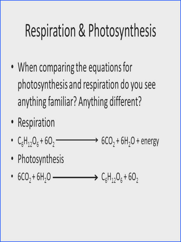 Respiration & synthesis