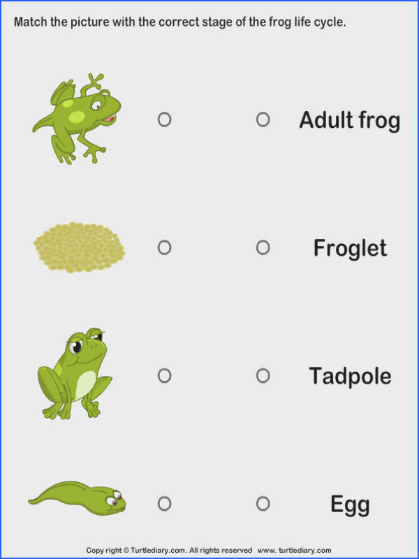 Learn about the life cycle of a frog with this fun interactive science game for kids Label arrange and play in the Frog Life Cycle from Turtle Diary