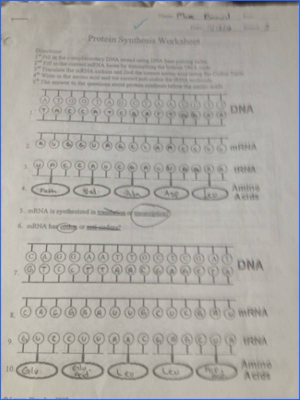 Image result for protein synthesis worksheet answers
