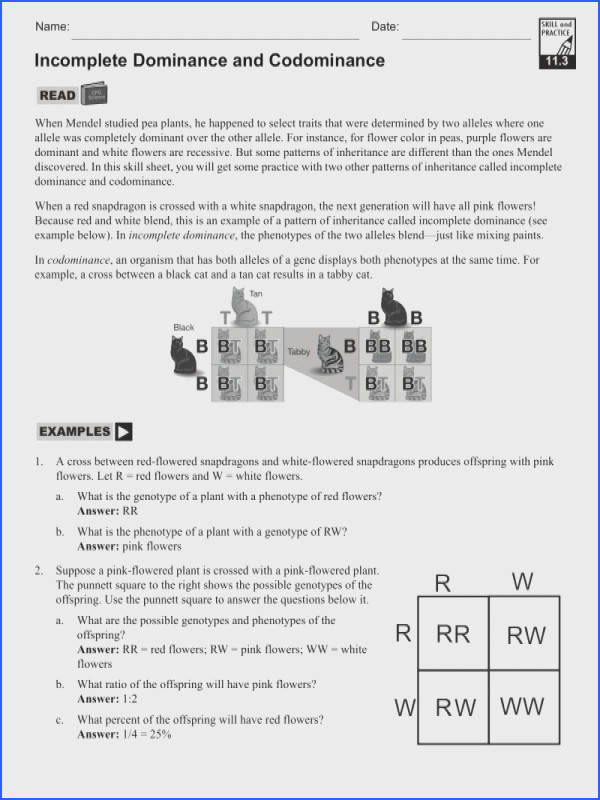 Blood Groups Worksheet A And An Worksheets Quiz · Simple Dominance In plete Dominance And · In plete Dominance And Codominance Worksheet Answer