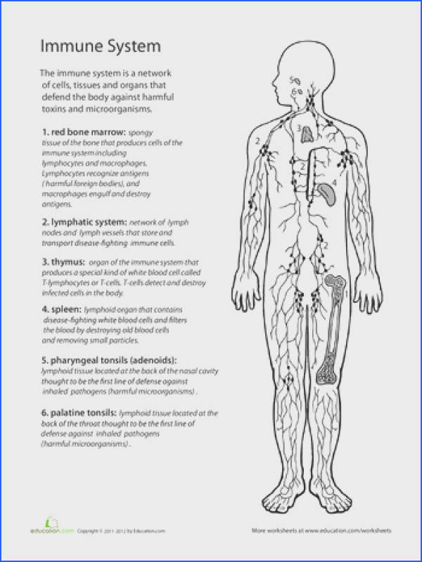 Inside Out Anatomy The Immune System