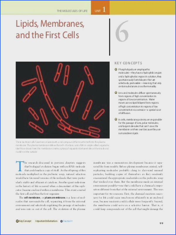 Chapter 6 Lipids Membranes and the First Cells Pearson Canada
