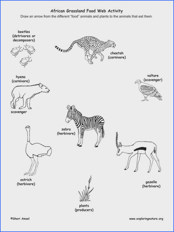 Learn about Food Webs and African Grasslands from Exploringnature