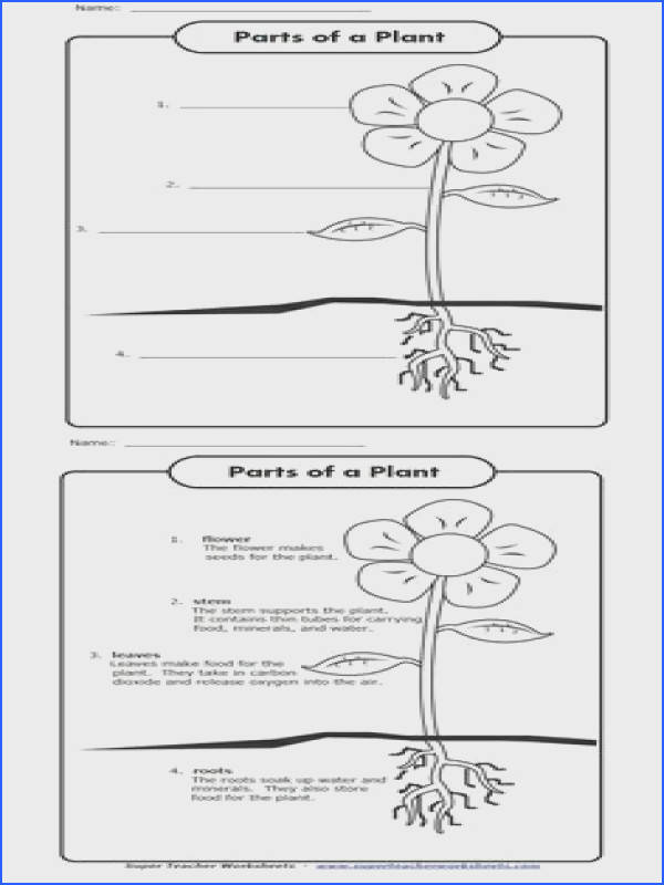 Celebrate Earth Day with this worksheets Label the parts of the plant shown in the