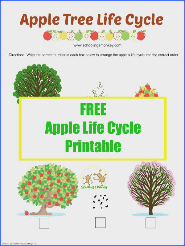Life Cycle An Apple Worksheet Worksheets for all Download and Worksheets