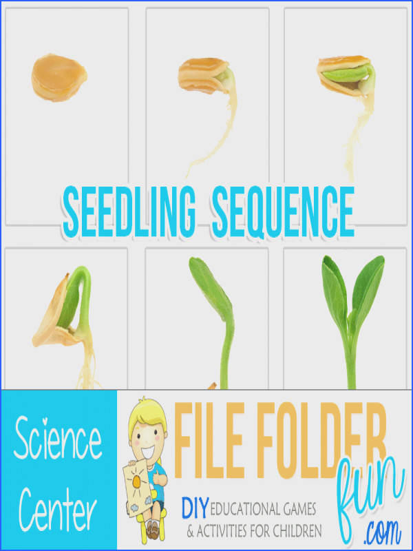 Seed to Plant Sequencing Cards Plant Life Cycle Sequencing Cards