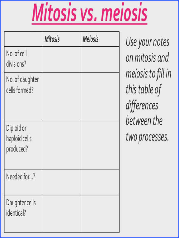 paring Mitosis And Meiosis Worksheet paring Mitosis And