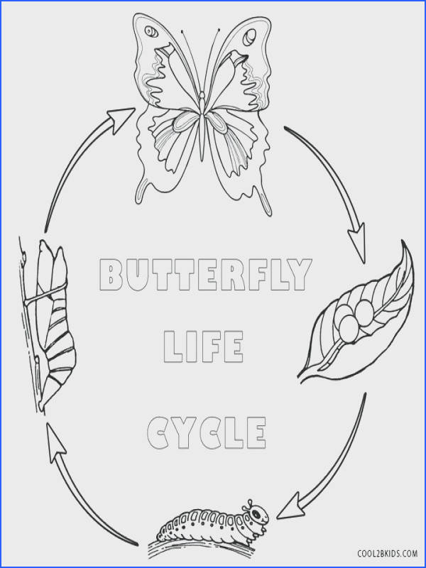 Monarch Butterfly Life Cycle Coloring Page Brilliant Butterfly Coloring Pages Printable 1Table