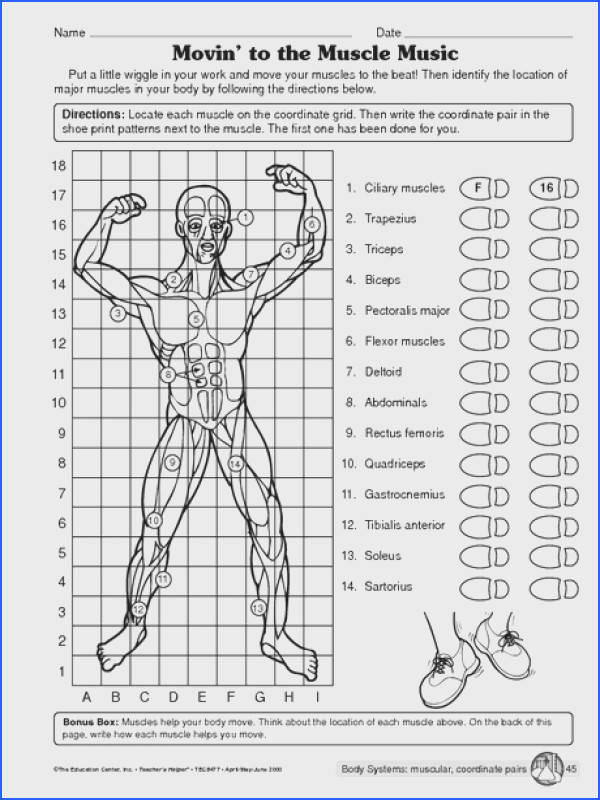 Muscular system worksheet More
