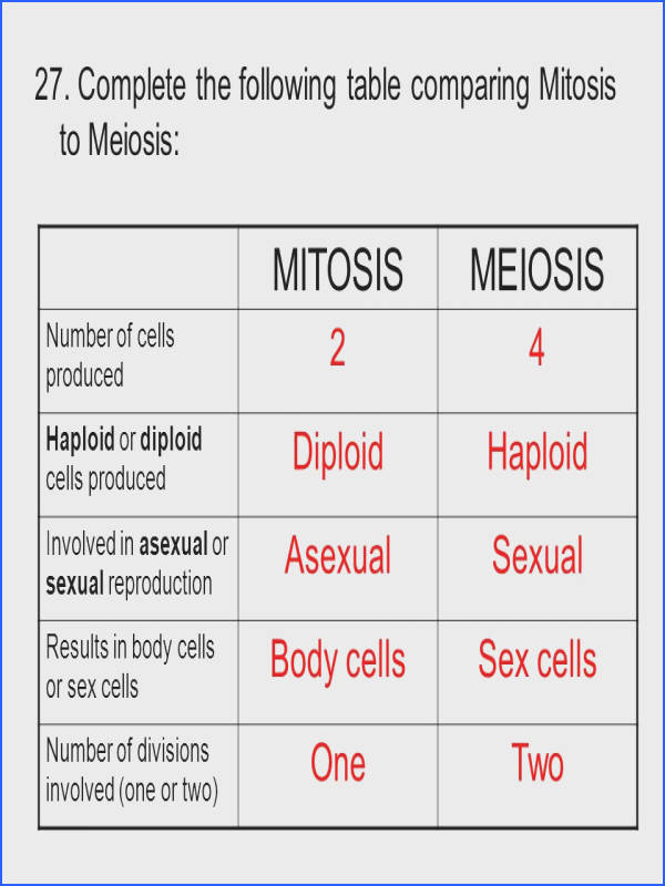 42 MITOSIS MEIOSIS Worksheet