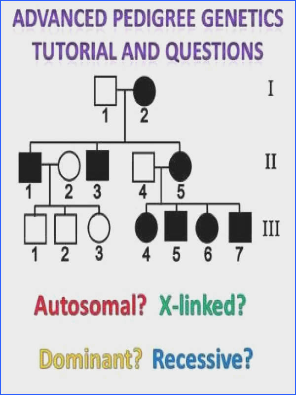 New Pedigree Genetics Packet Beyond the Autosomal Recessive Tutorial for 6 different Types of