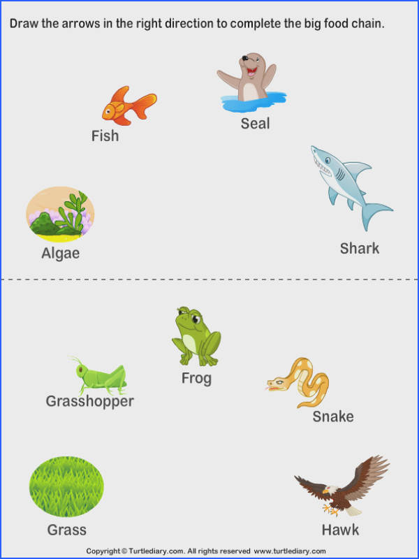 Free Printable Worksheets on Food Chain for practice Teach your kid about the Food Chain with our Food Chain Lesson Plan
