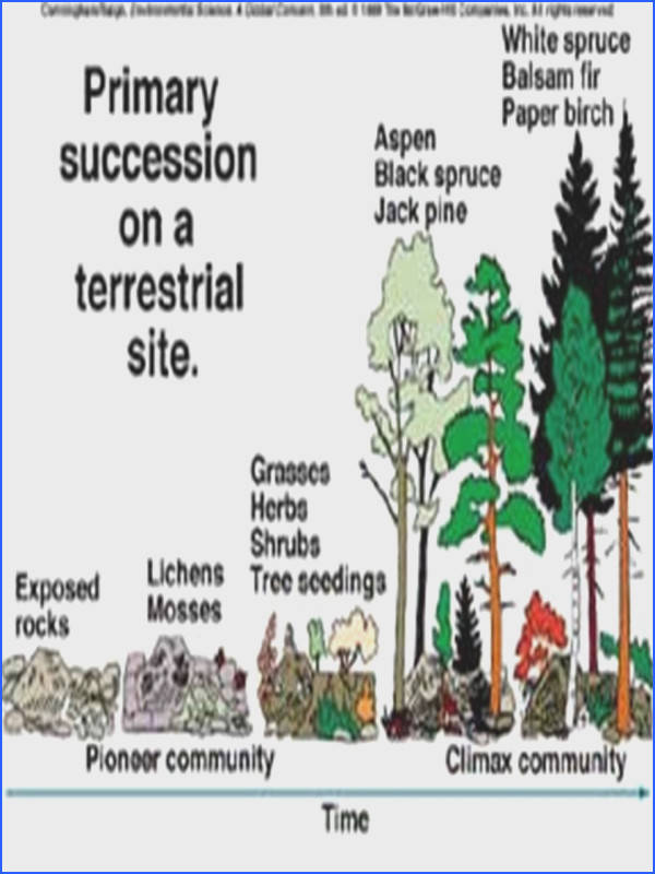 Primary And Secondary Succession Worksheet Worksheets for all Download and Worksheets