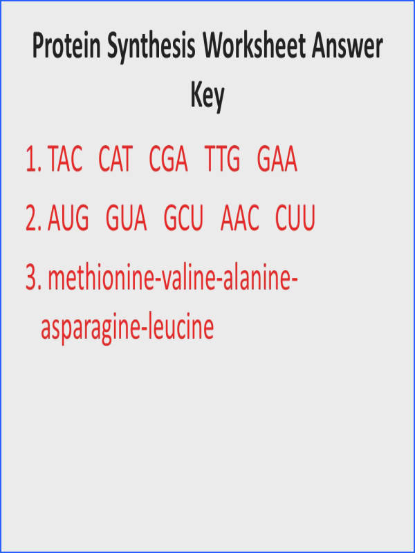 Protein Synthesis Worksheet Answer Key