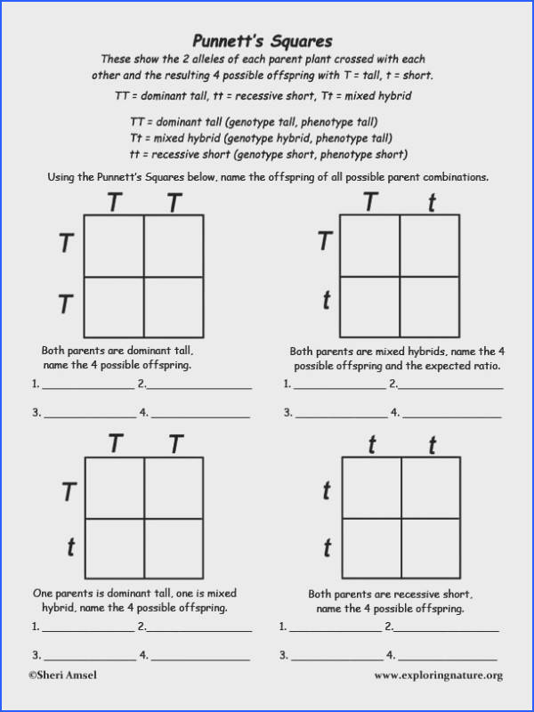 X linked recessive pattern of inheritance Teaching Science Pinterest