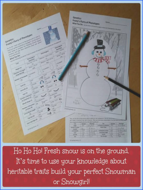 Christmas Science A Winter Genetics Activity Punnett Square