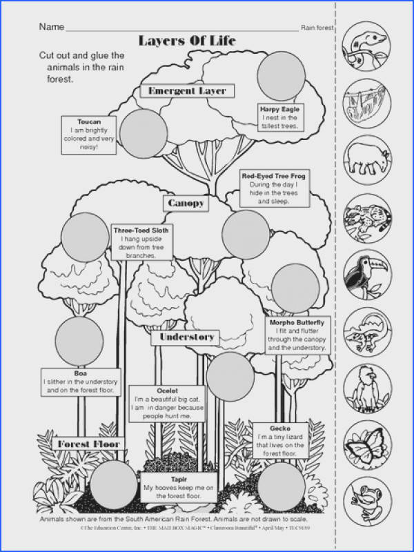 Rainforest Biome follow the link by clicking on the image for a plete lesson Teaching Ideas Pinterest
