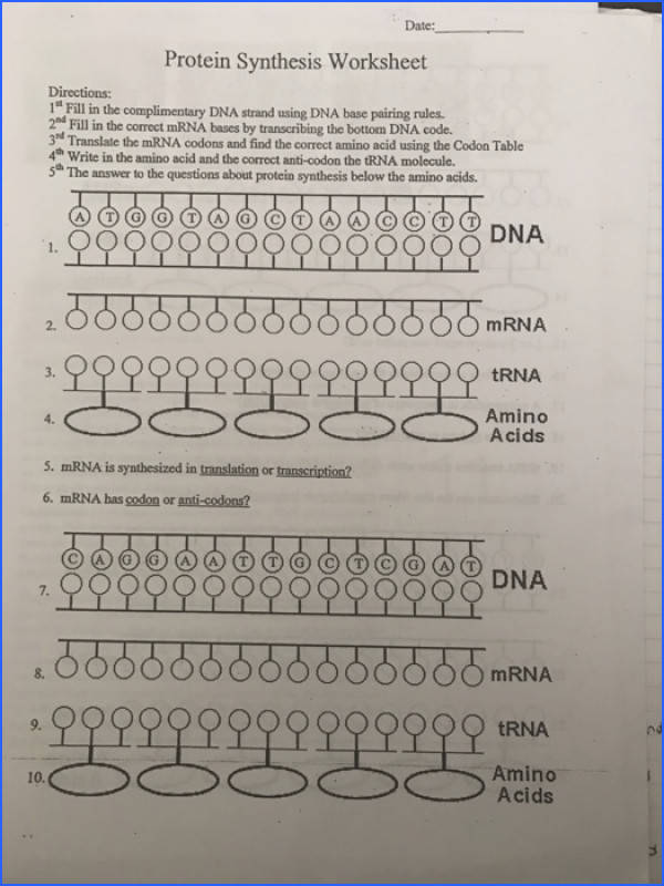 Date Protein Synthesis Worksheet Directions 1 Fill in the plimentary DNA strand using DNA