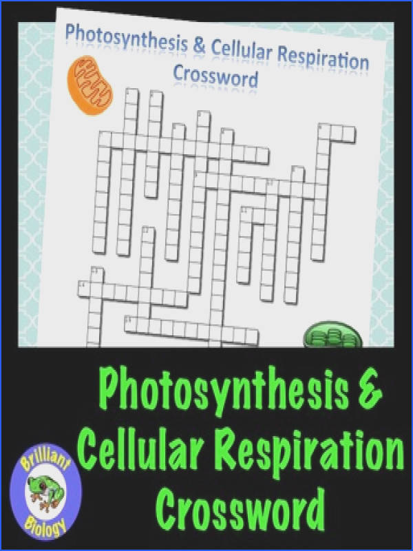 synthesis & Cellular Respiration Crossword Puzzle