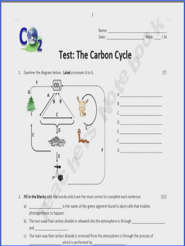 carbon cycle essay Water Carbon And Nitrogen Cycle Worksheet Toribeedesign