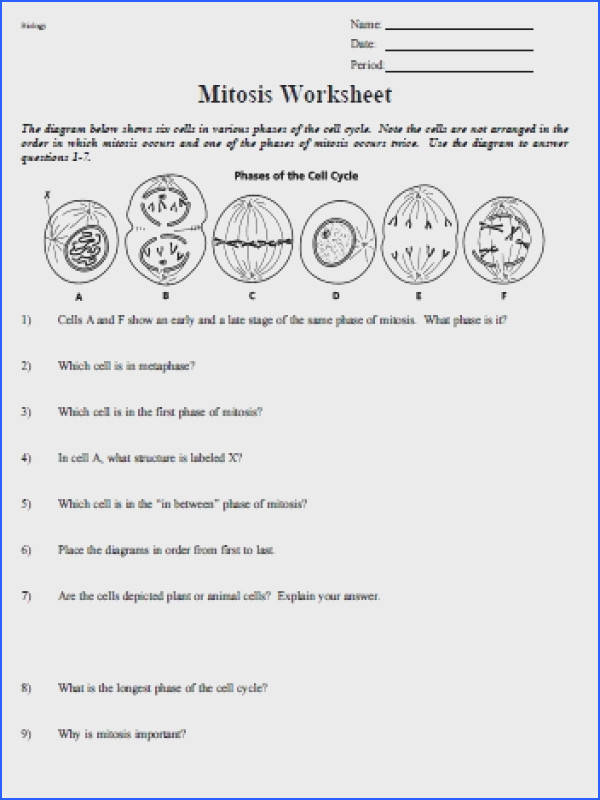 cell cycle and mitosis worksheet mitosis worksheet phases of the cell cycle free worksheets library