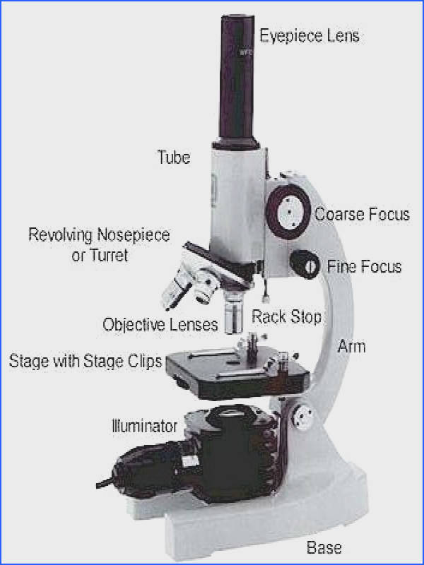 Basic Parts of a Microscope Physics Grab Bag Quiz Here are the