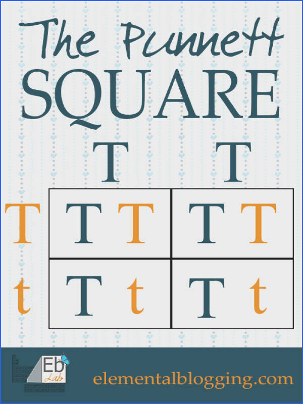 The Punnett Square FREE Printable and Science Activity Included from Elemental Blogging