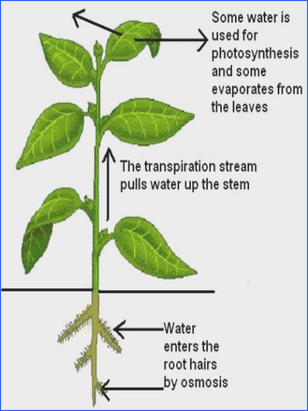 The Parts of a Plant interactive tutorials and quizzes