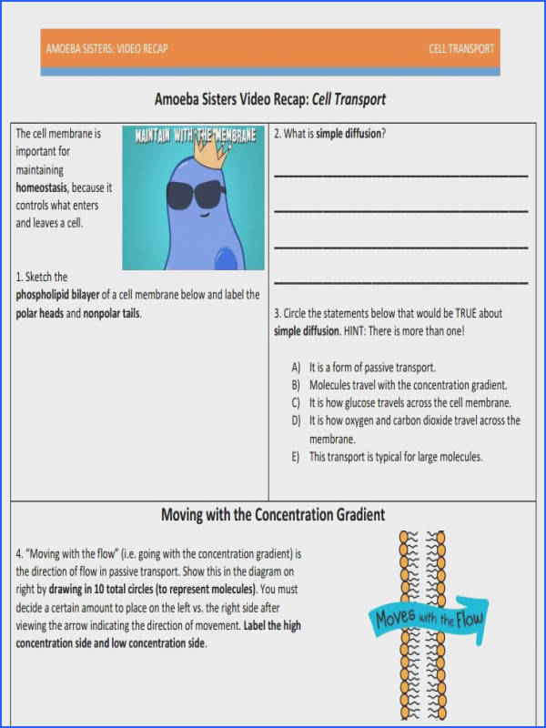 Transport In Cells Worksheet Unique Cell Transport Recap by the Amoeba Sisters Like Our Other Stock
