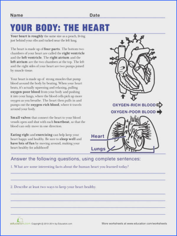 Fifth Grade Life Science Worksheets Heart Anatomy