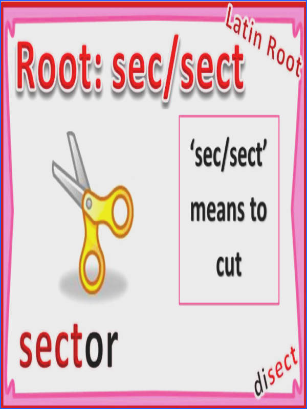 Print Root Words Review flashcards