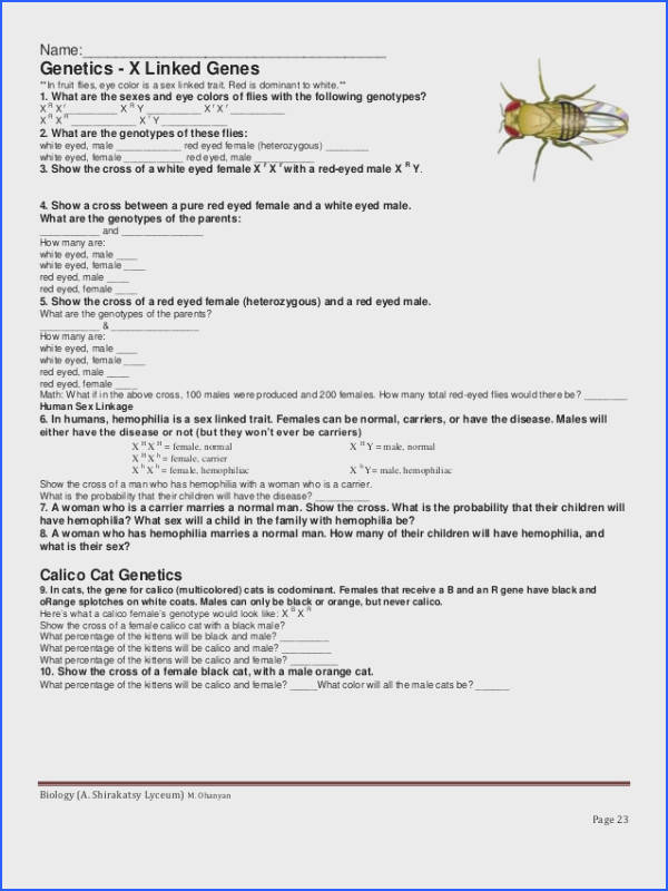 Sex Linked Traits Worksheet Answers | Mychaume.com